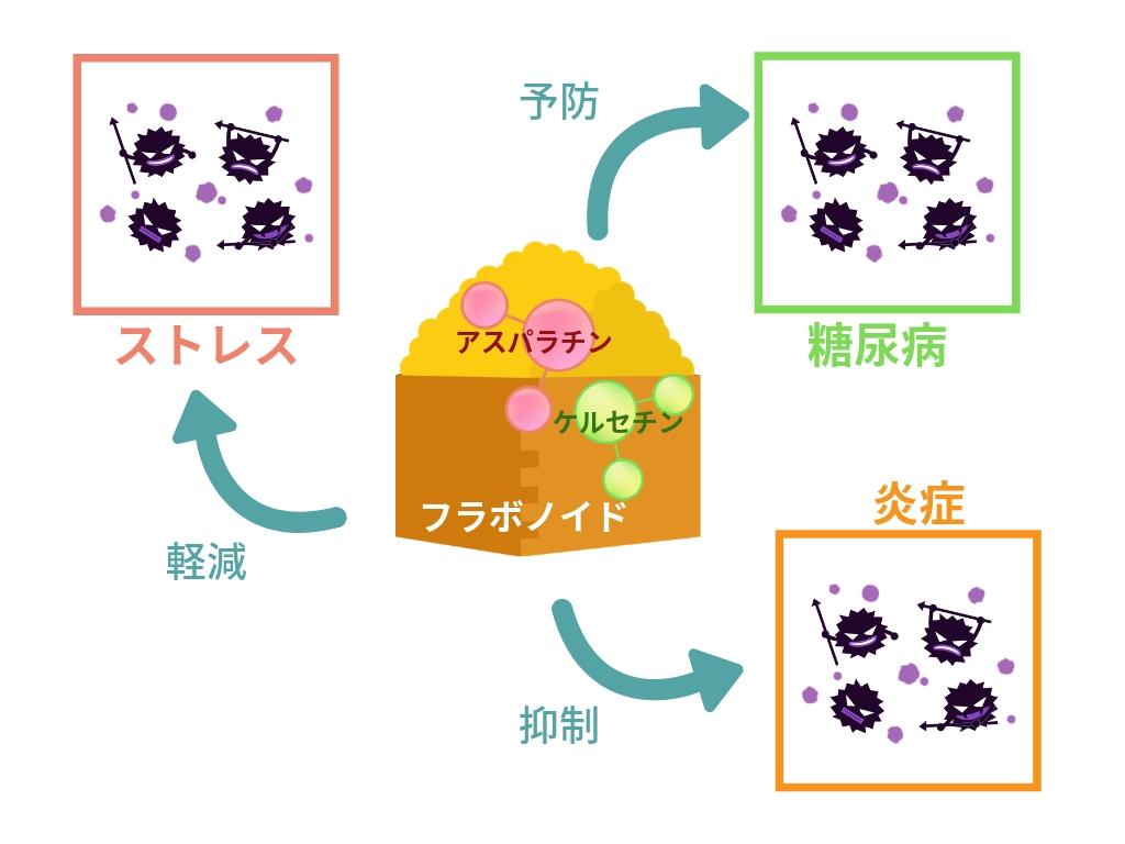 フラボノイドの作用